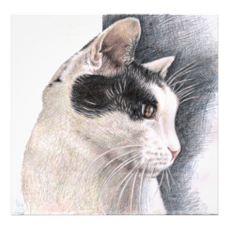 Cats View Art Photo