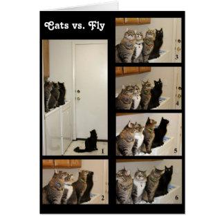 Cats vs Fly Birthday Card