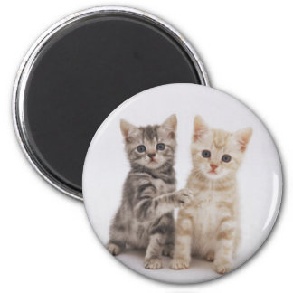 Cats Welcome Magnet