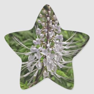 Cat's Whisker Flower Star Sticker