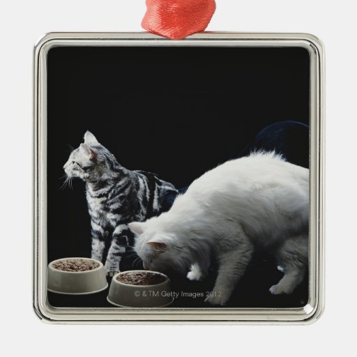 Cats with bowl of food metal ornament