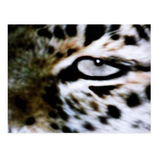 Catseye Postcard