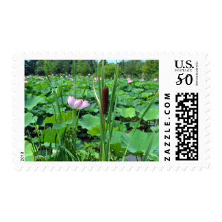 Cattail and Pink Flower Postage