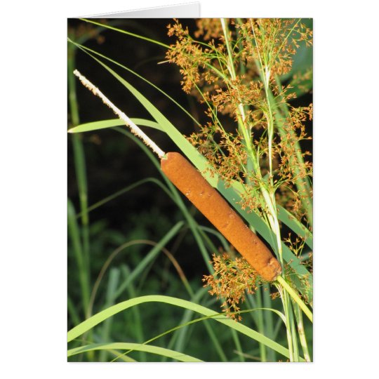 Cattail at Sunset Card