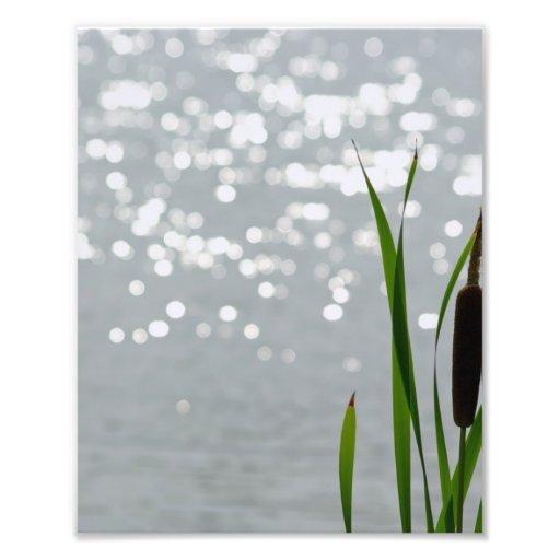 Cattail delante del lago fotografias