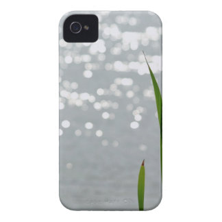 Cattail delante del lago Case-Mate iPhone 4 protectores
