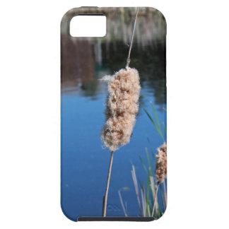 Cattail I iPhone SE/5/5s Case