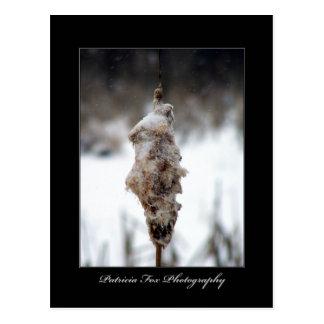 Cattail in Winter - Postcard