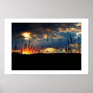 CatTail Sunrise Print