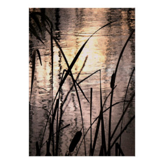 Cattails at Sunset Posters