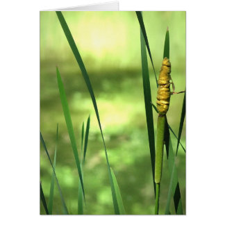 Cattails at the Pond Card