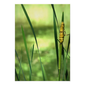 Cattails at the Pond Print