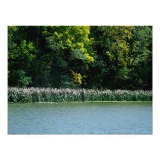 Cattails en el borde de los lagos impresion fotografica