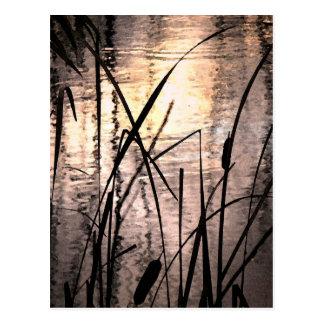 Cattails en la postal de la puesta del sol