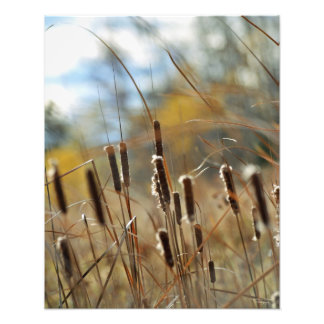 Cattails Framable Print