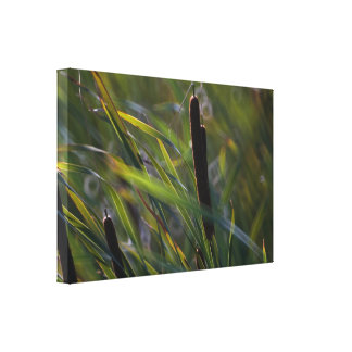Cattails in Breeze Canvas Wrap Wall Decor Canvas Prints