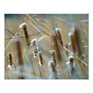 Cattails in the Breeze Framable Photo Print