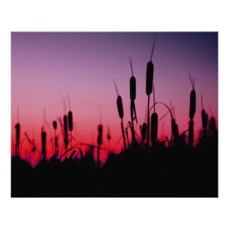 Cattails in the Sunset Poster