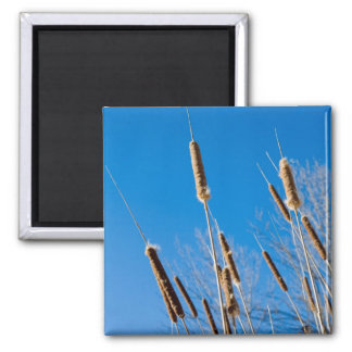 cattails of winter 2 inch square magnet