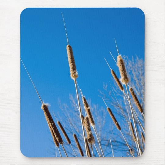 cattails of winter mouse pad