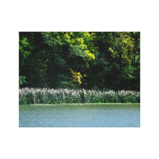 Cattails On The Lakes Edge Canvas Prints
