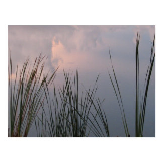 CatTails - Reeds Postcard