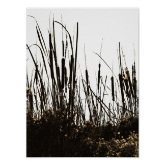 Cattails Silhouette Poster
