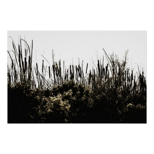 Cattails Silhouette Posters
