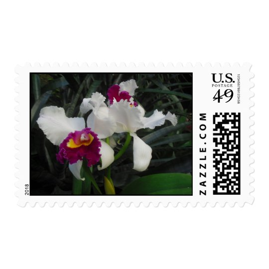 Cattaleya Orchid Postage