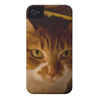 Cattitude iPhone 4 Covers