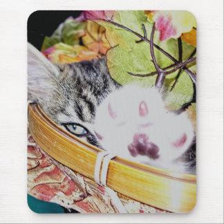 Cattitude, gatito del gato del gatito, colores de tapete de raton
