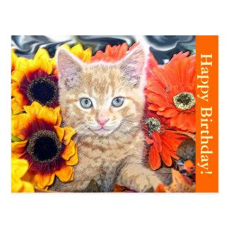 Cattitude, Kitty Cat Kitten, Blue Eyes, Portrait Postcard