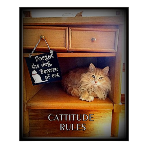 Cattitude Rules POSTER