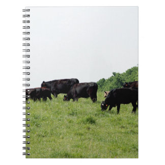 Cattle Black Angus Notebook