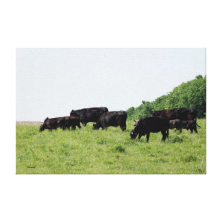 Cattle Black Angus Wrapped Canvas