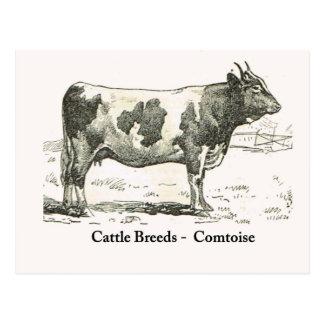 Cattle Breeds, France, Comtoise Postcard