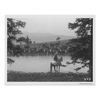 Cattle by a pond with two cowboys. poster
