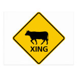 Cattle Crossing Highway Sign Postcard