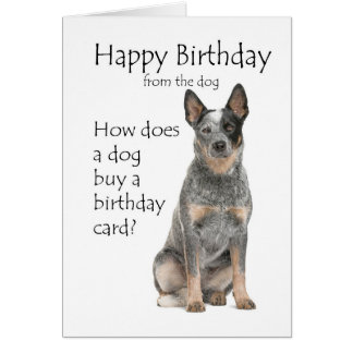 Australian Cattle Dog Birthday Gifts on Zazzle