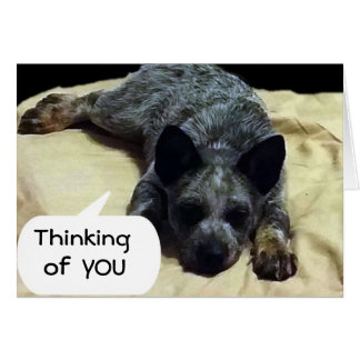 CATTLE DOG IS LONGING FOR A SPECIAL SOMEONE CARD