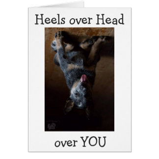 CATTLE DOG IS UPSIDE DOWN AND IN LOVE WITH YOU CARD