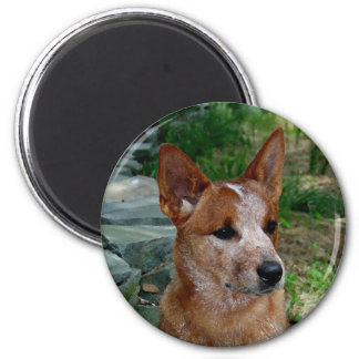 Cattle Dog Magnets
