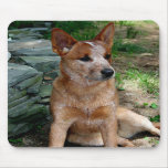 Cattle Dog Mouse Pads