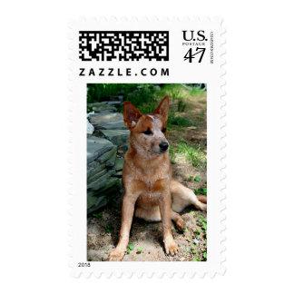 Cattle Dog Postage
