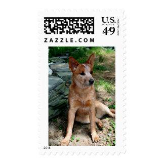 Cattle Dog Stamp