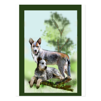 CATTLE DOG POSTCARD