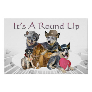 Cattle Dog Round up Poster