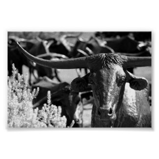 Cattle Drive Poster