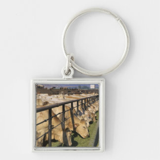 Cattle eat at a feedlot in Grandview Idaho Key Chain