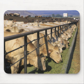 Cattle eat at a feedlot in Grandview Idaho Mouse Pad